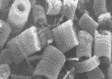 Diatoms_image