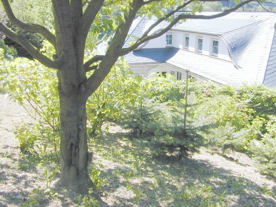 Tree bark before placing Duplex